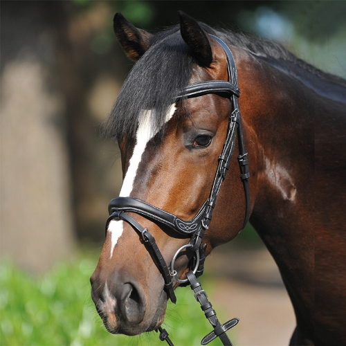kavalkade-ivy-anatomical-bridle-with-flash-noseband-black