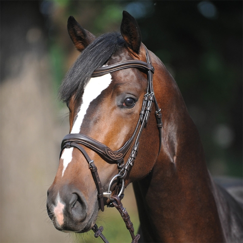 kavalkade-ivy-anatomical-bridle-with-flash-noseband-brown