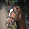 kavalkade-ivy-anatomical-bridle-with-flash-noseband-brown-cob