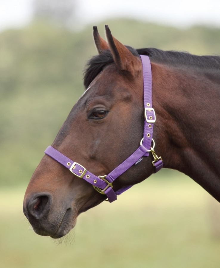 shires-nylon-headcollar-purple-full