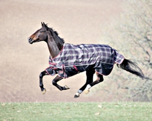 shires-stormbreaker-turnout-rug-2012-blackbeige-check