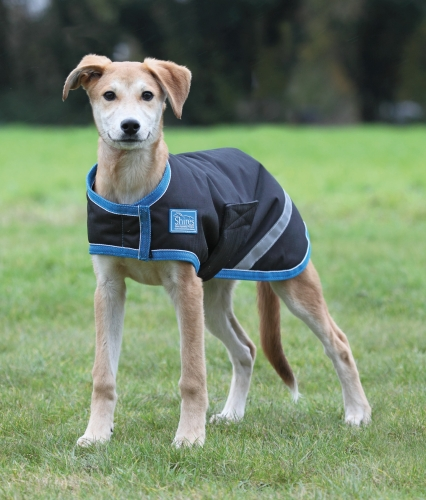 shires-tempest-waterproof-dog-coat-blackturquoise