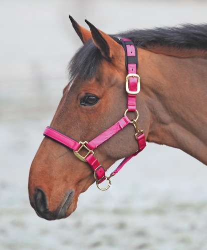 shires-topaz-nylon-headcollar-raspberry-pony