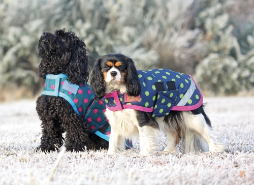 shires-waterproof-dog-coat-2015-spots-design-navylime-spot-large