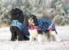 shires-waterproof-dog-coat-2015-spots-design-navylime-spot-medium