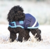 shires-waterproof-dog-coat-navybright-blue-x-small